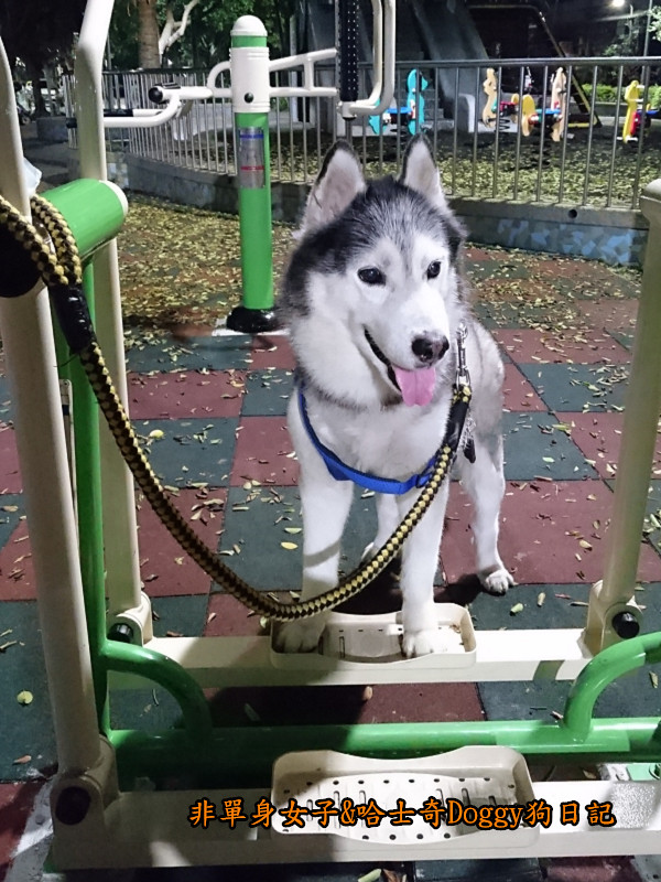 Doggy颱風28