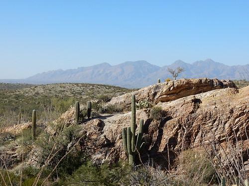 Saguaro NP - saguaro - 3