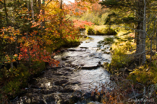 autumn trees plant canada tree fall water creek canon river landscape october stream novascotia outdoor foliage riverbed canonrebel serene brook dslr canondslr fallcolours 2015 canonrebelxsi