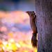 Nutty climber by hedera.baltica
