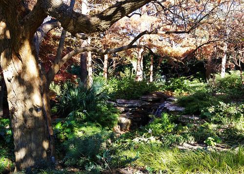 2015.12.07 Dallas Arboretum