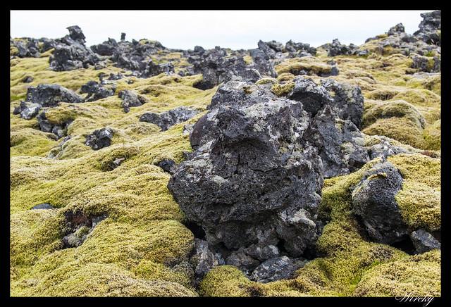 10 cosas que ver en Djúpalónssandur y Dritvík - Campos de lava con musgo