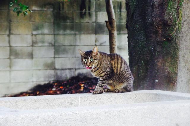 Today's Cat@2016-09-24
