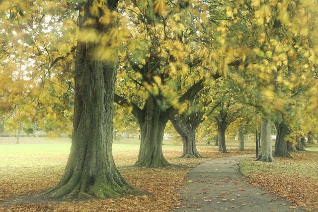 Treelined Autumn