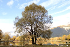 Plan d'eau arbre