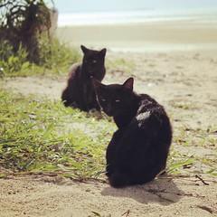 Black Twins of Taketomi Island #NekoCollection *017 Kondoi Beach, Taketomi Island, Yaeyama, Kyushu 2nd November 2016  #cat #neko #japan #Taketomi #beach #island #ishigaki #black #two #2 #ねこ 猫