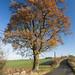 Suffolk lane by WaypointCharlie
