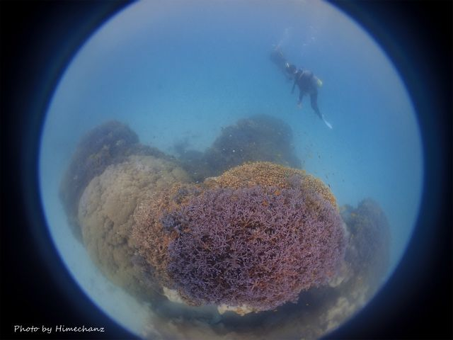 青い珊瑚礁、いつ見てもキレイ!
