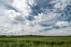 Norfolk sky over reeds