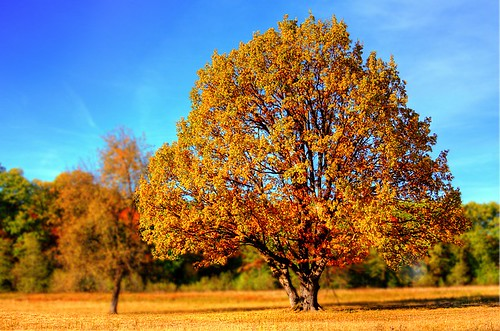 tree-autumn01