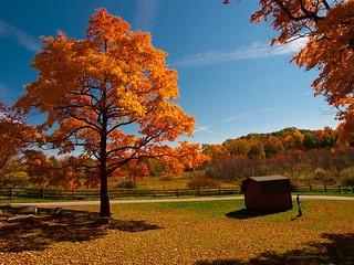 Autumn in Ohio
