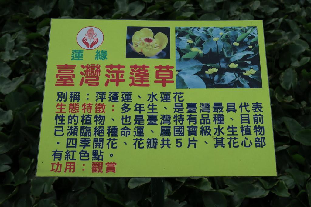 台南市白河區蓮緣香水蓮花園 (28)