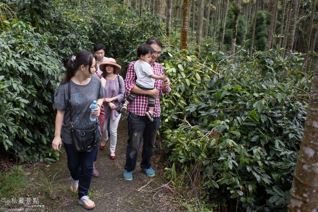 村長咖啡-天池咖啡步道 (10)