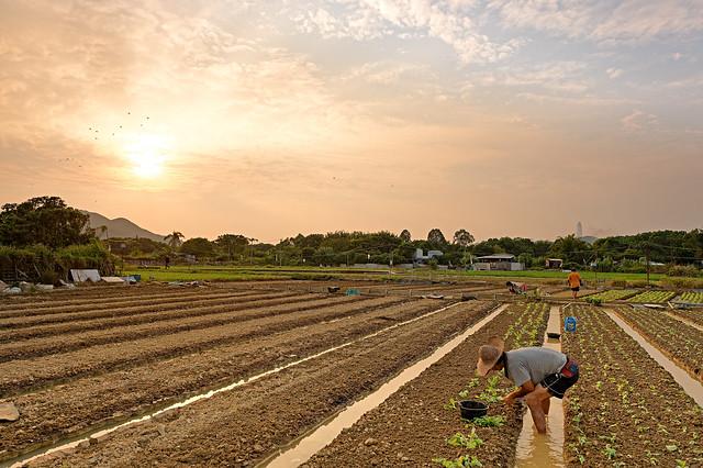 Farming at Long Valley, Hong Kong