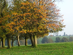 Autumn Colours - Yorkshire