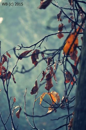 autumn tree nature garden herbst ősz