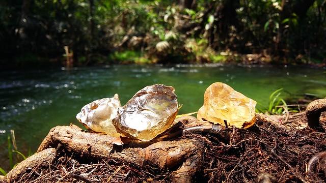 Olhar do leitor. Jamaraqua. Foto de WendellMedeiros