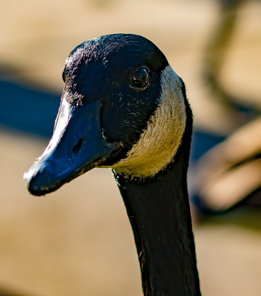 Fotos de animales de todo tipo incluyendo mascotas que más te gustan - Página 12 23500888980_a380a74f57_b