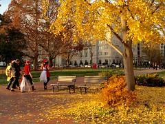Fall leaves, lingering until Xmas