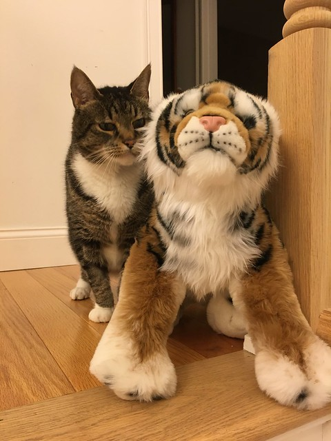 MF and the tiger