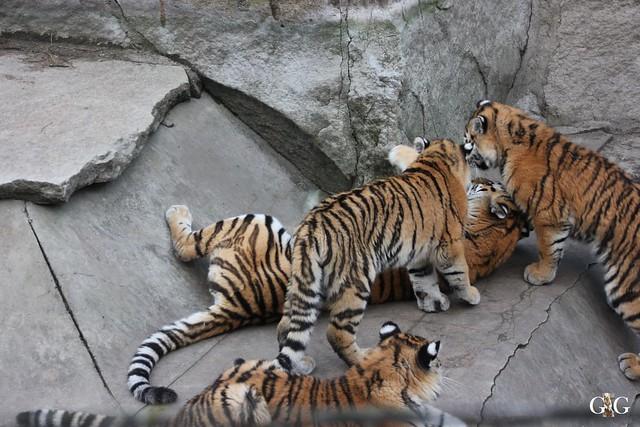1. Feiertag im Tierpark Berlin60
