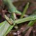 Praying Mantis cannibalism by dogtooth77