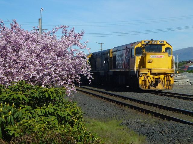 Blossom and Train, Panasonic DMC-TZ20