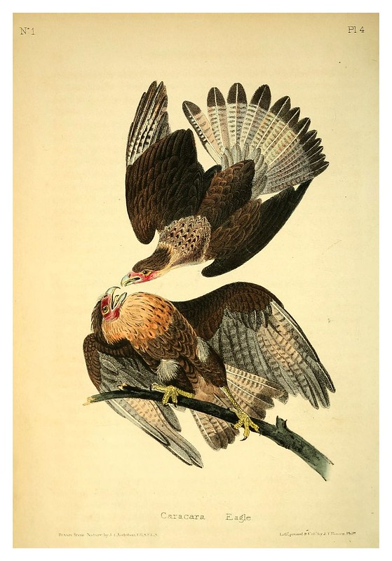 001-Agila Caracara- Vol1-1840--The birds of America…J.J. Audubon