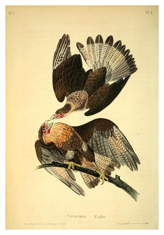001-Agila Caracara- Vol1-1840--The birds of America…J.J. Audubon