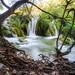 Jungle by Rainer Schund