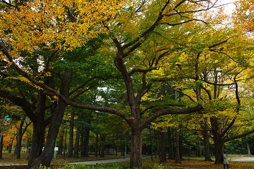 円山公園、紅葉が見頃