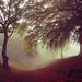 Autumnus Caligo by kenny barker