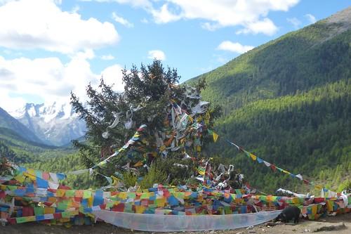 CH-Route-Danba-Bamei (8)