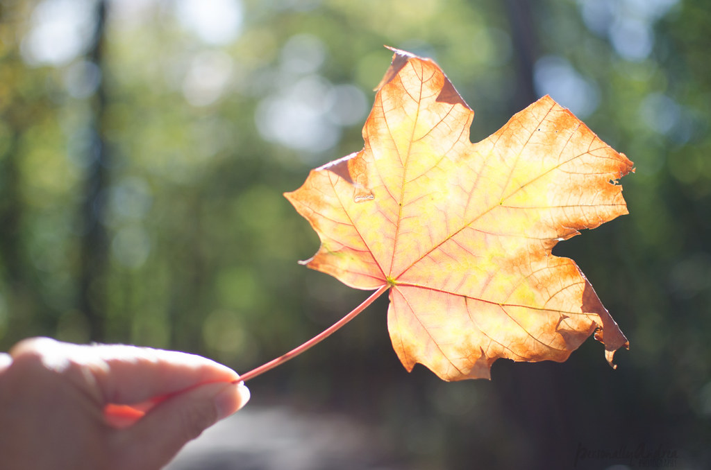 How to Photograph Fall | Leaf