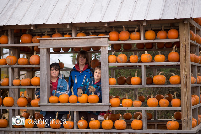 Pumpkin picking 2015-8