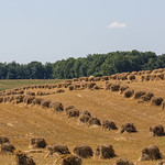 Field in Hawkesville, Ontario