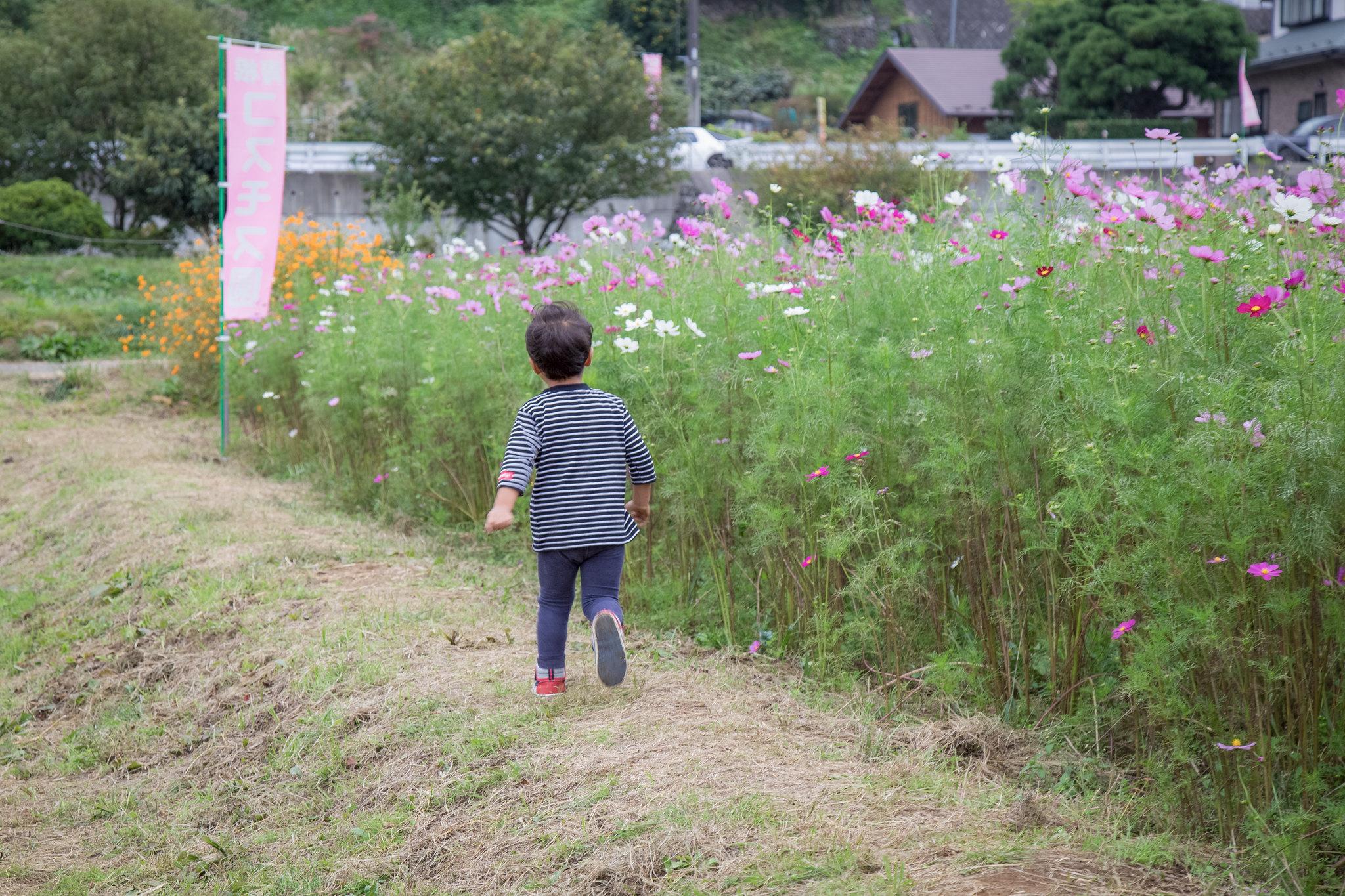 2014-10-12 神之川キャンプ場と青根コスモス園 009