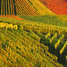 Colorful Autumn Vineyard - Stuttgart, Germany by Batikart