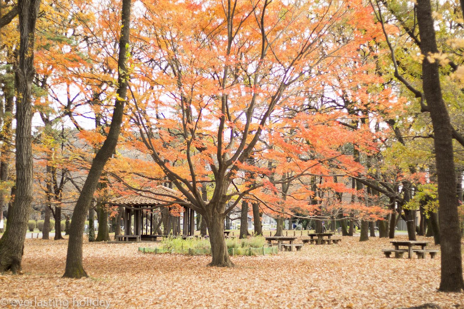 小金井公園 Koganei Park-0008
