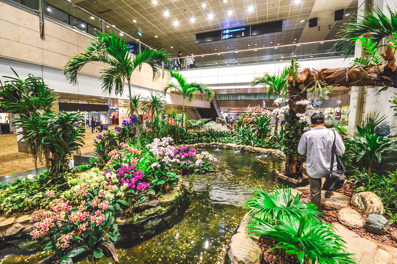 Colours textures of changi airport s orchid garden for Indoor gardening singapore
