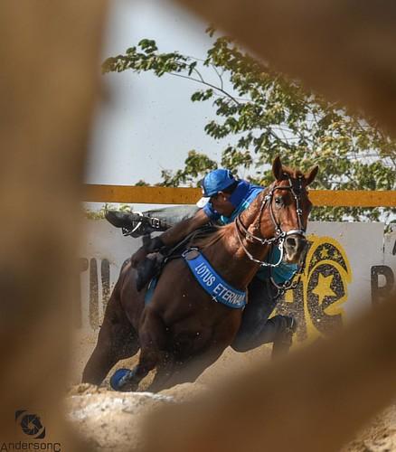 Dai vc está com o clique no foco é de repente um cavalo passa na frente da sua câmera... Vc pensa... Perdi a foto!! Não! Vc ganhou uma foto!!! Com direito a Moldura 😁 #Qualidade #arte #Foco #DeusNoComando #MelhorFotografoDoAno #UmNovoJeitoDeFotografa