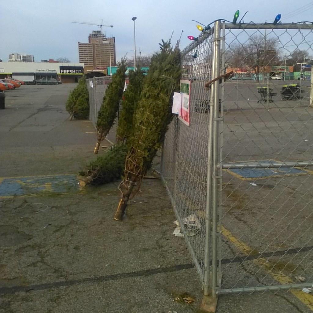 Last trees at the lot #toronto #christmastree #galleriamall #dupontstreet #dufferinstreet #christmas #tree