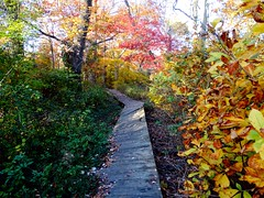 Brookside Preserve - Autumn (13)