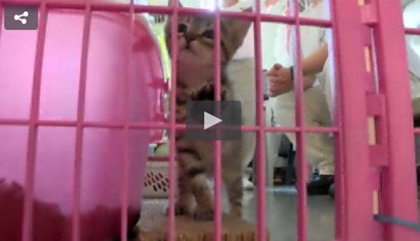 kittens-help-prisoners