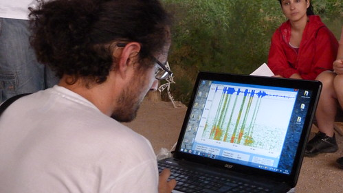 Detector de ultrasonido de murciélagos
