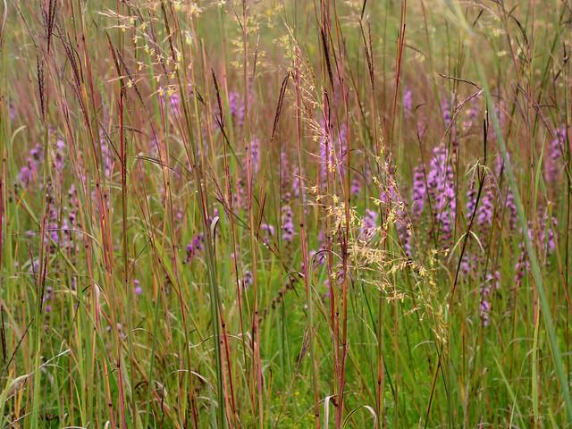 8.29 Nachusa Tall Grass Prairie