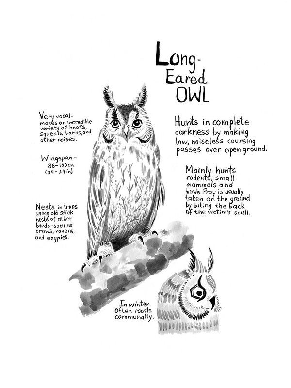 Owls_07_Long_Eared