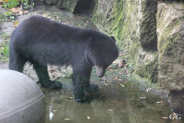 Sonntags-Besuch im Tierpark Friedrichsfelde 04.10.20153