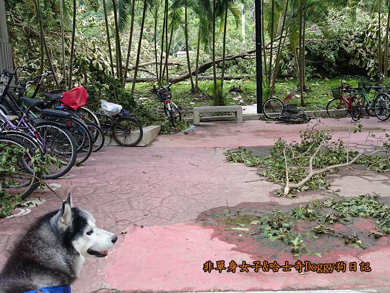 Doggy颱風24