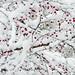 snow berries by CathyH_
